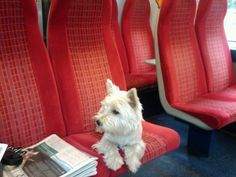 Westie on a South-west(ie) train. With @Hollie Baker Kaitoula Tou Rodolfou A. Roe heading into London for the first time - August 2012