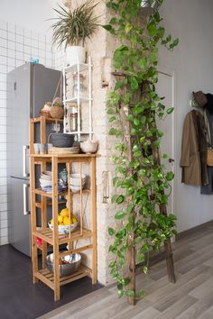 Beautiful Wall Climbing Plants Indoor Ideas For Your Home Decoration 01 Beautif… - Modern House Plants Decor, Plant Decor, Wall Climbing Plants, Spanish House, Room Decor Bedroom, Bedroom Plants Decor, Indoor Plants, Porch Plants, Indoor Ivy