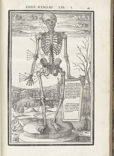 Woodcut skeleton figure standing on a marble column base in a pastoral setting, facing forward, with Latin text surrounding him pointing to and naming numerous bone structures, Page 43 from Charles Estienne's De dissection partium corporis humani libri tres, 1545.