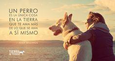 Amor Animal, Mundo Animal, Dog Quotes, Animal Quotes, Dog Phrases, Animals And Pets, Cute Animals, Dog Tumblr, Best Dog Training