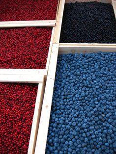 lingonberries, wild Swedish blueberries, and American highbush blueberries at the market, Hötorget Stockholm, Sweden