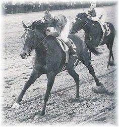 thoroughbred horses | Nashua: 1955 Horse of the Year