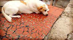 O cachorro Biro. Rua Amarais, Vila Formosa. Foto: Wagner Barbosa
