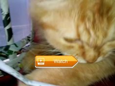 😸 Funny cat disturbs owner 😼 😽 on Pet Lovers 😻