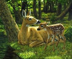 doe and fawn | whitetail doe and fawn - Painting - Nature Art by Crista Forest