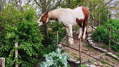 Equestrian Stables, Equestrian Girls, Horse Stables, Dream Stables, Dream Barn, Horse Shed, Horse Paddock, Farm Layout, Summer Plants