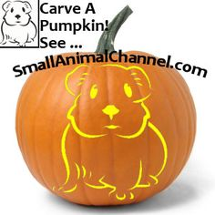 Yes, you can have a pumpkin carved with a pattern for a rabbit, ferret, hamster, guinea pig or other small animal pet! Pumpkin Stencil, Pumpkin Art, Halloween Kids, Halloween Pumpkins, Pumpking Carving, Guinea Pig Costumes, Small Pet Supplies, Character Pumpkins, Pumpkin Tattoo