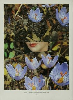 Collage by Helen Sykes