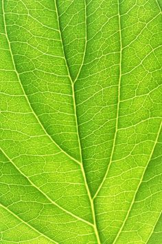 Leave Background Patterns, Plant Leaves, Wallpaper, Plants, Paintings, Wallpapers, Plant, Planets