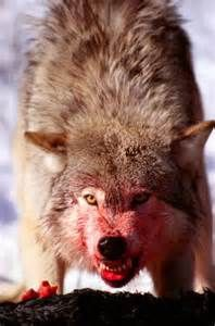 Image result for bloody wolf