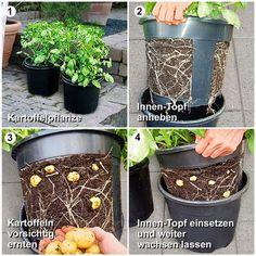 Buy PotatoPot potato planters online from Gärtner Pötschke Garden Boxes, Edible Garden, Vegetable Garden, Hydrangea Seeds, Hydrangea Care, Organic Gardening, Gardening Tips, Pot Jardin, Diy Greenhouse