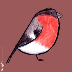 Bullfinch illustration