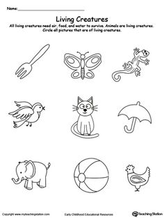 **FREE** Understand Living Things: Animals Worksheet. All animals need air, food and water to grow and survive. Identify the animals in this printable worksheet by circling the correct pictures.