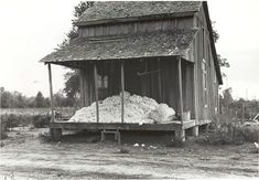Ben Shahn – Cotton on porch of sharecropper's home, Maria plantation, Arkansas, 1935 Vintage Photographs, Vintage Photos, Ben Shahn, Mississippi Delta, Dust Bowl, Ares, Thats The Way, New York Public Library, African American History