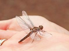 Dragonfly Gloomy Day, Beneficial Insects, Dragonflies, Garden, Ideas, Be Nice, Dragon Flies, Garten, Lawn And Garden