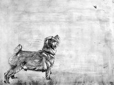 Norfolk Terrier and Bumblebee © Guy Allen