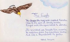 Waldorf ~ 4th grade ~ Human & Animal ~ Eagle ~ main lesson book