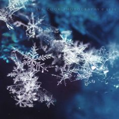 Nature is full of genius, full of the divinity; so that not a snowflake escapes its fashioning hand - Henry David Thoreau