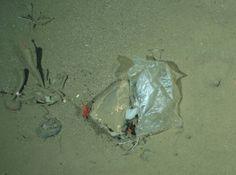 plastic arctic circl