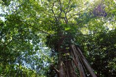 cahuita national park snorkeling hiking tour tree   - Costa Rica