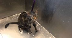 Cat Pleads 'No More' During Bath Time