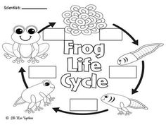 Frog Freebies!  from Little Miss Kindergarten on TeachersNotebook.com -  (4 pages)  - So much frog freebie fun. These freebies go well with my I Can Be A Scientist Exploring Life Cycles unit!