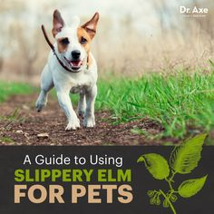 Slippery elm for pets - Dr. Axe http://www.DrAxe.com #health #holistic #natural
