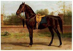 otto eerelman | ... Otto Eerelman met een uitgebreide beschrijving van deze paarden