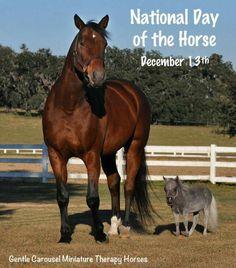 Big and little horses