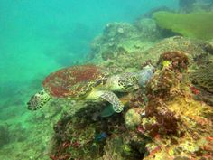 Diving in Andaman Sea, Phi phi island