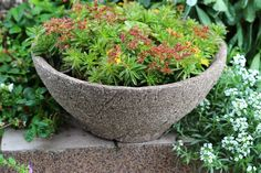 Lenka Tokarska – Google+ Succulents, Google, Plants, Succulent Plants, Plant, Planets
