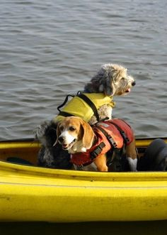 Kayaking dogs. For dogs that swim or boat, make sure your dogs are safe with life jackets.