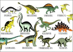Dinosaur Name Chart / Large / x Dinosaur Types, Dinosaur Facts, Dinosaur Posters, Dinosaur Crafts Kids, Dinosaurs Preschool, All Dinosaurs, Dinosaurs Names And Pictures, Dinosaur Birthday Party, 3rd Birthday
