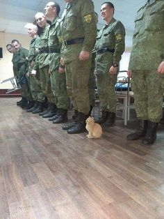 Military cat - your daily dose of funny cats - cute kittens - pet memes - pets in clothes - kitty breeds - sweet animal pictures - perfect photos for cat moms Funny Animal Jokes, Cute Funny Animals, Funny Animal Pictures, Animal Memes, Amazing Animal Pictures, Beautiful Pictures, Beautiful Cats, Cute Cats And Kittens, Kittens Cutest