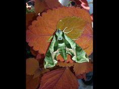 Love nature Plant Leaves, Nature, Plants, Naturaleza, Plant, Nature Illustration, Off Grid, Planets, Natural