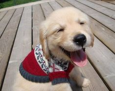 16 Happy Puppies Guaranteed To Put A Smile On Your Face 30 - https://www.facebook.com/diplyofficial