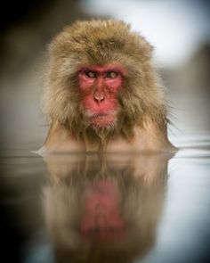 In the Drink Photo by Philip Field -- National Geographic Your Shot