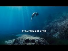 "[BSO] ""Otra forma de vivir"". Estrella Damm 2019. - YouTube Music X, Music Videos, Spain, Youtube, Movies, Movie Posters, Natural, Shape, Songs"