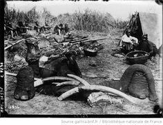 Au Congo Belge, à Bimbo dépeçage des éléphants : [photographie de presse] / Agence Meurisse - 1