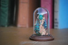 Beetles colourful in glass dome on wood base by ExoticInsects