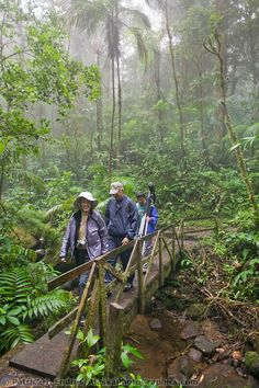 Monte Verde Cloud Forest, Costa Rica | Patrick J. Endres