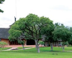 Mama Tau Private Game Lodge Conference Venue in Waterberg situated in the Limpopo Province Province of South Africa. Provinces Of South Africa, Game Lodge, Private Games, Travel And Tourism, Most Favorite, Conference, Golf Courses, Destinations, Viajes