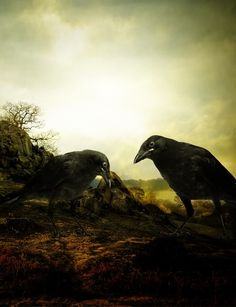 crows and ravens photo: Crows n Ravens The_Crows_by_figueline.jpg