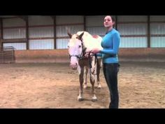 The basics of how to do a showmanship pivot with you horse.