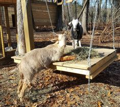 Miles and Grace like their breakfast served on the goat swing