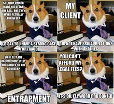 """""""Doggie Lawyer"""" [hehe!!]"""