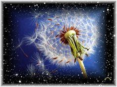Diamanti di gioia Negli angoli dimenticati di questa mente si nasconde sempre una scintilla in attesa di nuova presenza di ascolto vero Non mettere a tacere paure o rabbia raccogli bagliore ed acce...