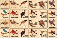 """Using Peterson's """"Field Guide to Birds of North America"""" as inspiration, these beautiful memory tiles are a great way for kids to learn how to recognize birds. Made in Middlebury, Vermont, the tiles a Tiles Game, Bird House Kits, Bird Aviary, Thing 1, 12 Image, Memory Games, Backyard Birds, Field Guide, Matching Games"""