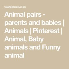 Animal pairs - parents and babies | Animals | Pinterest | Animal, Baby animals and Funny animal