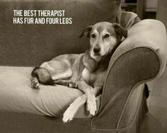 Best therapist = dog.  Best therapy = nature.  So take your dog on a walk already!